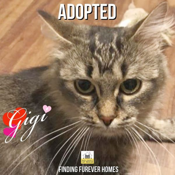 Gigi-Adopted-on-November-24-2019-with-Dexter