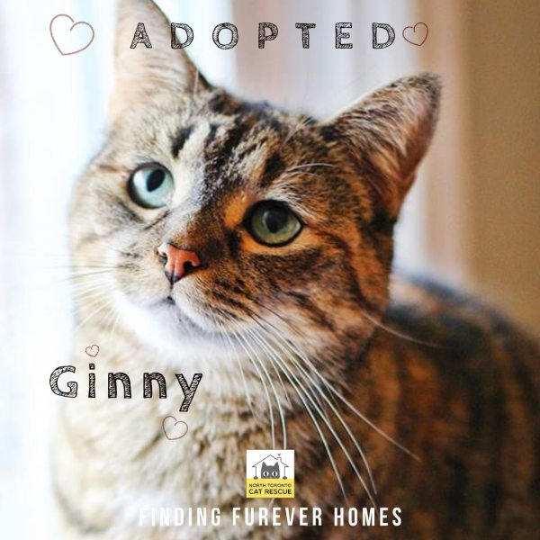 Ginny-Adopted-on-May-5-2019-with-Milo