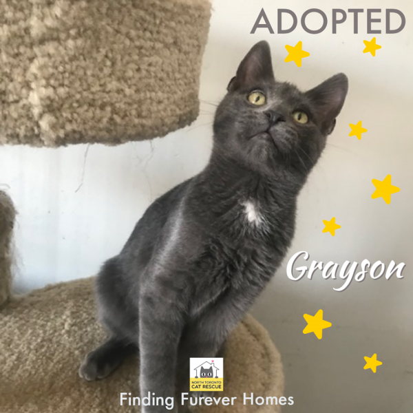 Grayson-Adopted-on-March-20-2020-with-Niki