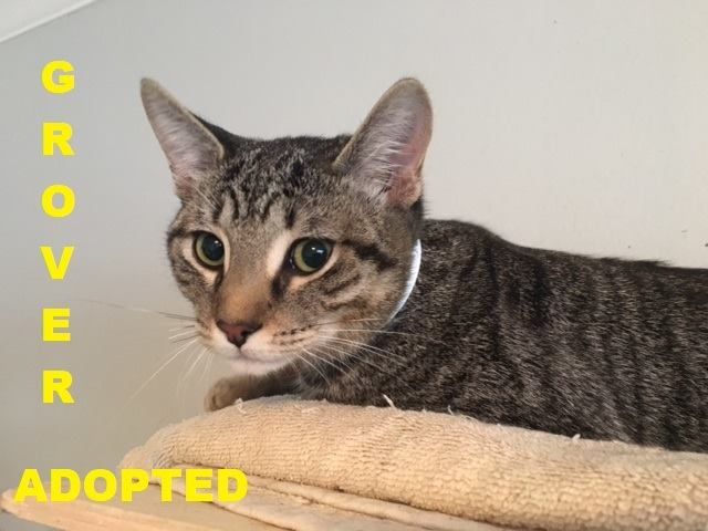 Grover - Adopted - May 16, 2018