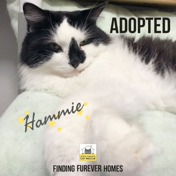 Hammie-Adopted-on-February-16-2020