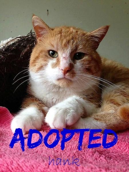 Hank - Adopted - June 4, 2017