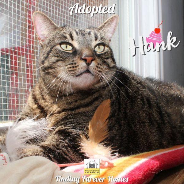 Hank-Adopted-on-May-16-2020