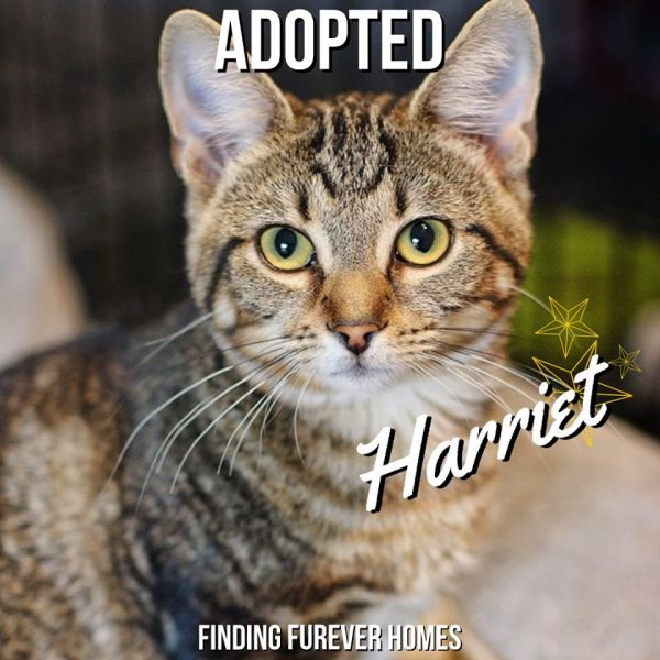 Harriet-Adopted-on-November-24-2019-with-Ozzie