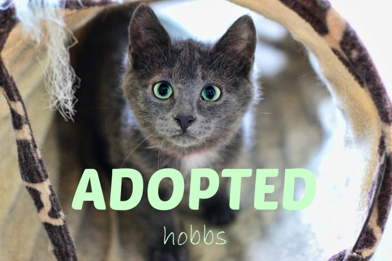 Hobbs - ADOPTED - March 4,2017