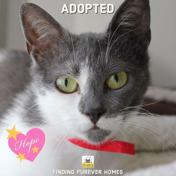 Hope-Adopted-on-May-17-2020-with-Faith