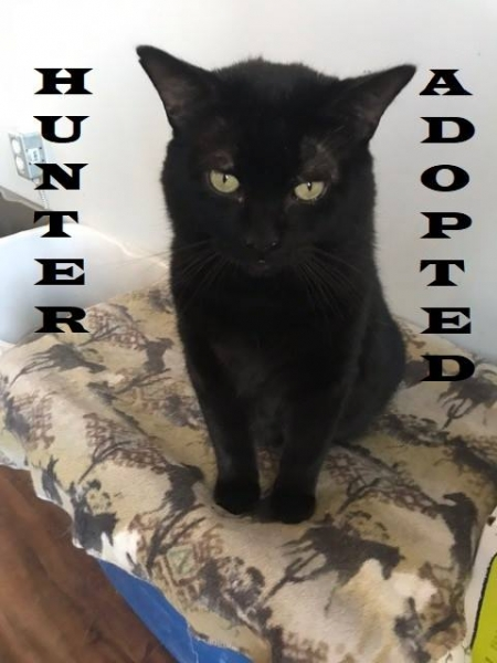 Hunter - Adopted on January 12, 2019