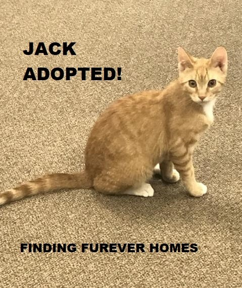 Jack-Adopted-on-June-6-2020