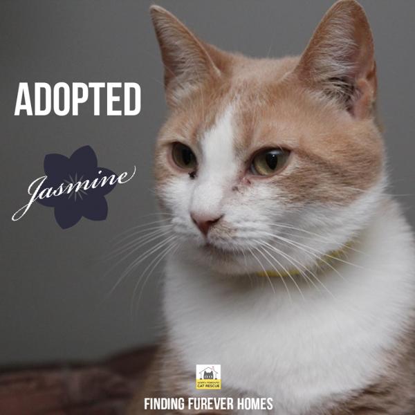 Jasmine-Adopted-on-June-28-2020