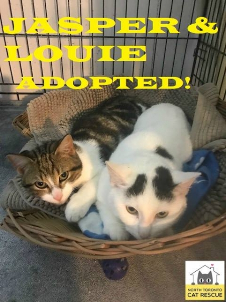 Jasper-and-Louie-Adopted-on-March-16-2019-Together