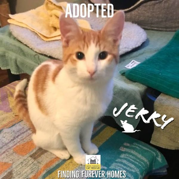 Jerry-Adopted-on-January-5-2020-with-Tom