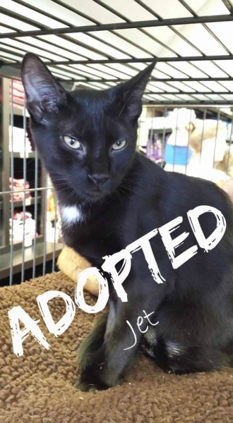 Jet - ADOPTED - March 19,2017