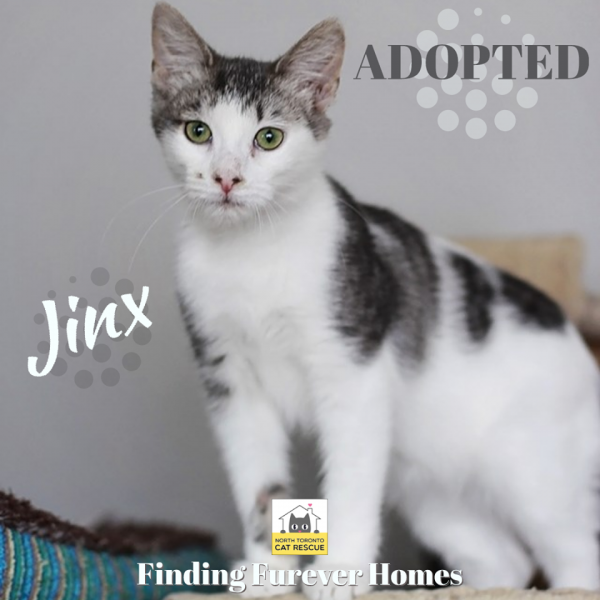 Jinx-Adopted-on-January-1-2020-with-Linus