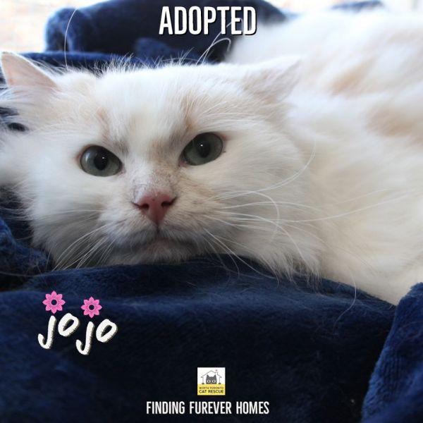 JoJo-Adopted-on-May-4-2020