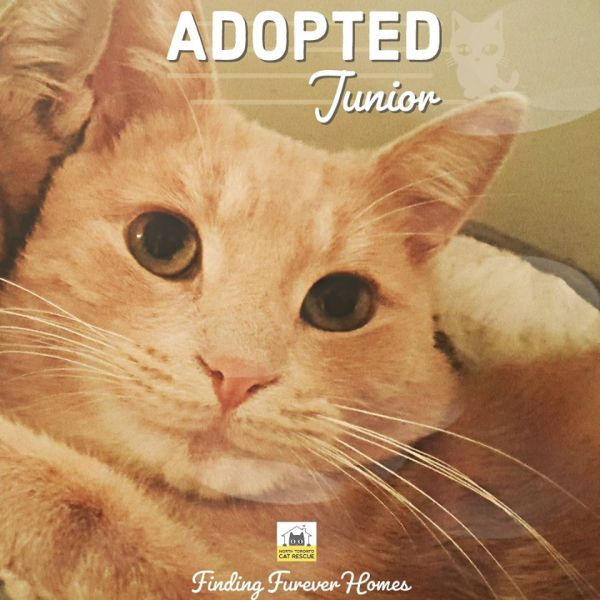 Junior-Adopted-on-December-14-2019