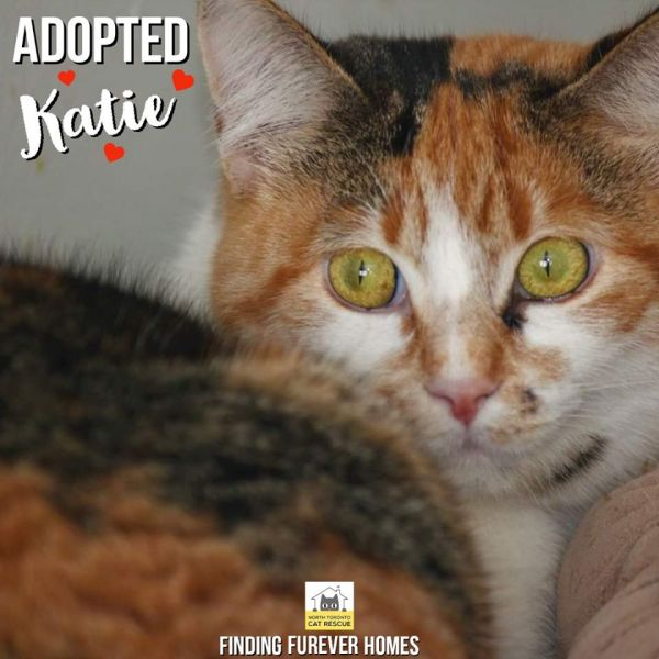 Katie-Adopted-on-June-28-2020