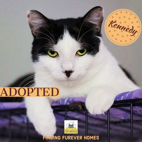 Kennedy-Adopted-on-June-23-2019