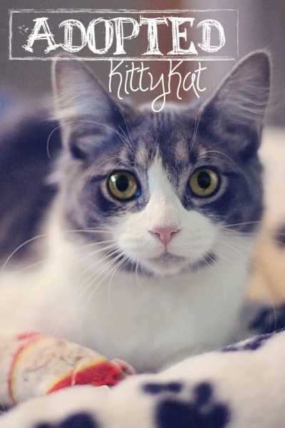 Kitty-Kat1