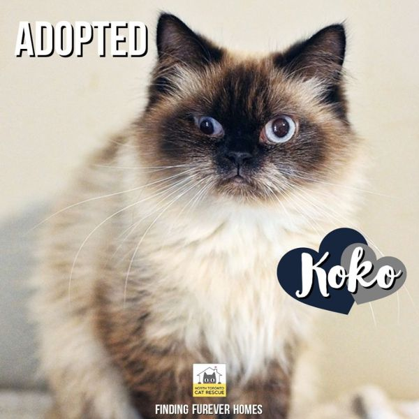 KoKo-Adopted-on-December-29-2019-with-Ginger