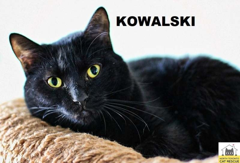 Kowalski-Adopted-on-October-12-2019