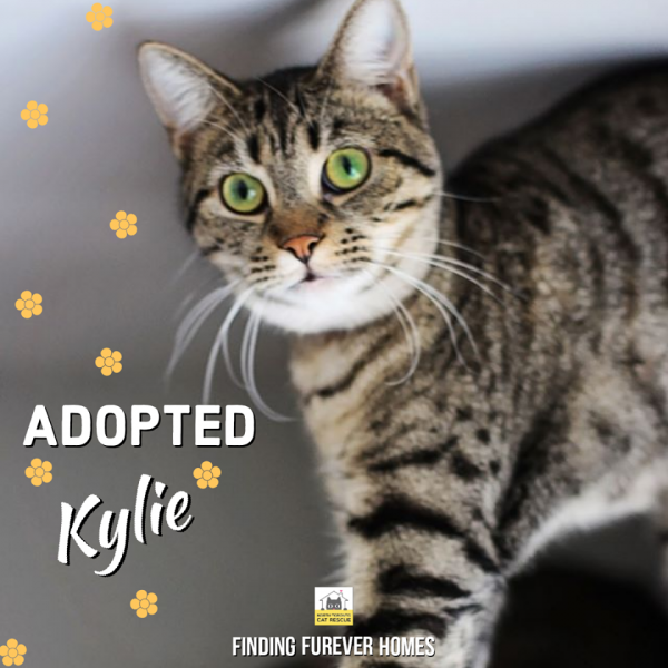 Kylie-Adopted-in-2020-with-Asia-and-Whisper