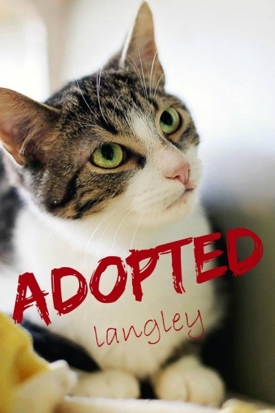 Langley - ADOPTED - February 10,2017