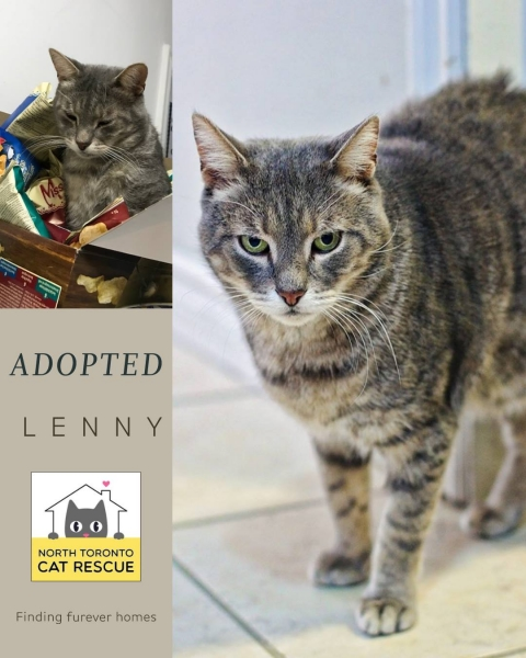 Lenny-Adopted-on-March-31-2019