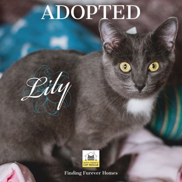 Lily-Adopted-on-June-8-2019-with-Domino