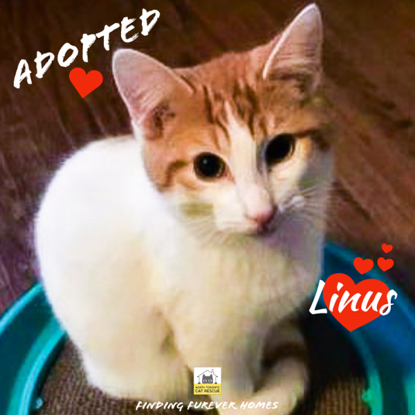 Linus-Adopted-on-January-1-2020-with-Jinx