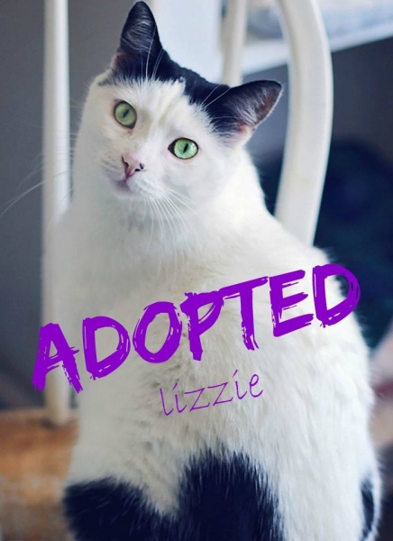 Lizzie - ADOPTED - April 12,2017