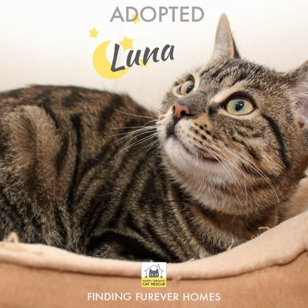 Luna-Adopted-on-April-4-2020-with-Dennison