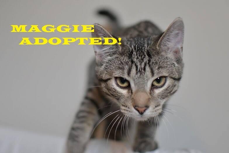 Maggie - Adopted - September 24, 2018 with Jorja