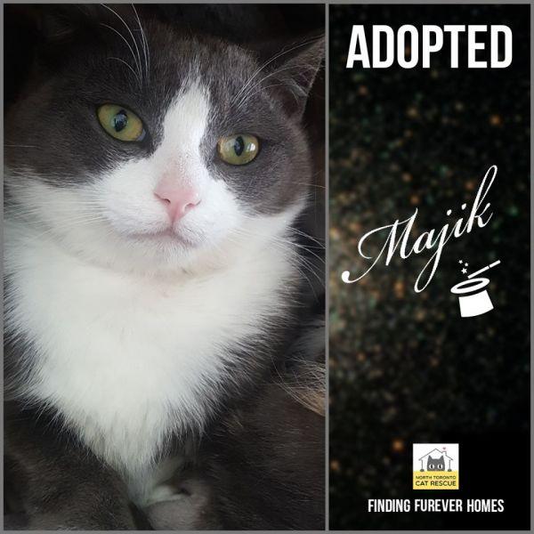 Majik-Adopted-on-May-24-2020-with-Mindi