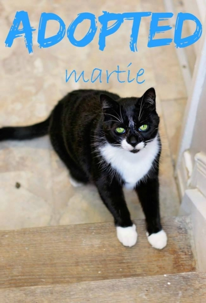 Martie - ADOPTED - May 7,2017