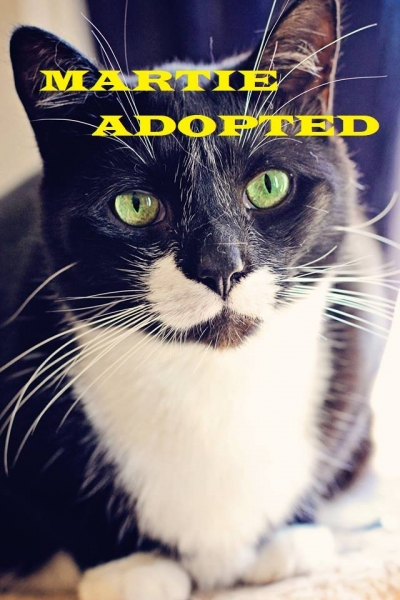 Martie - Adopted - January 20, 2018 with Sylvie