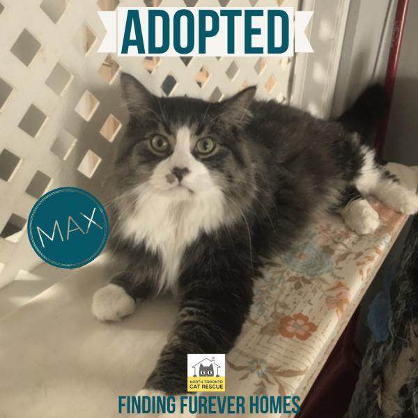 Max-Adopted-on-May-25-2019