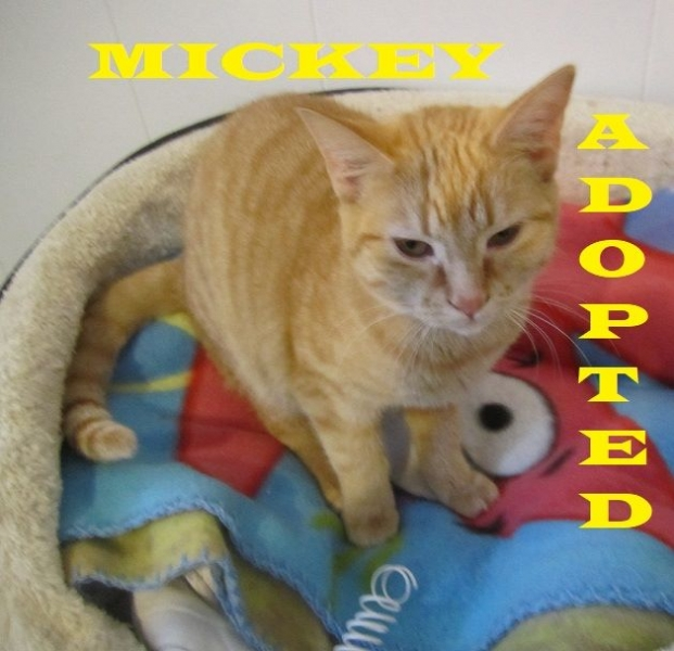 Mickey - Adopted - February 10, 2018 - with Avi