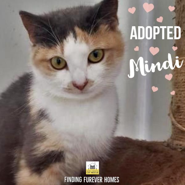 Mindi-Adopted-on-May-24-2020-with-Majik