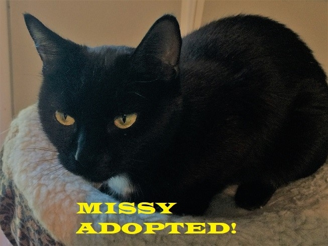 Missy - Adopted - August 26, 2018 with Patti