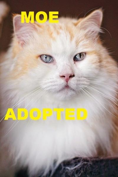Moe - Adopted - April 13, 2018