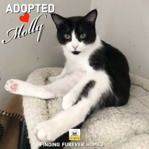 Molly-Adopted-on-March-21-2020