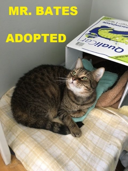 Mr. Bates - Adopted - April 29, 2018 with Tansy