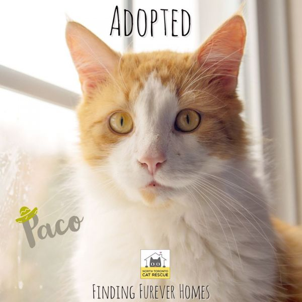 Mr.-Paco-Adopted-on-January-25-2020