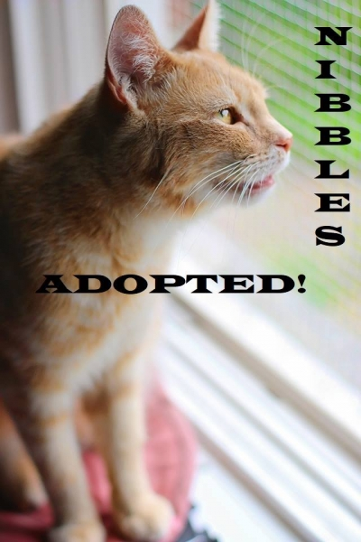 Nibbles - Adopted on March 1, 2019