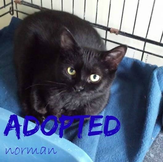 Norman - ADOPTED - March 18, 2017