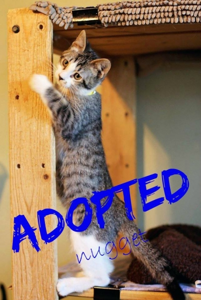 Nugget - ADOPTED - January 14, , 2017