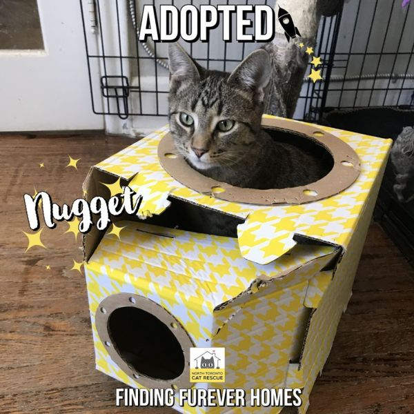 Nugget-Adopted-on-March-26-2020