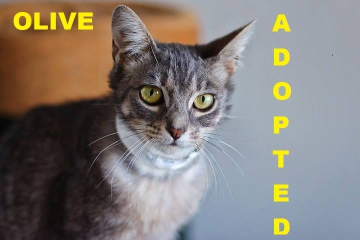 Olive - Adopted - March 14, 2018 with Terri