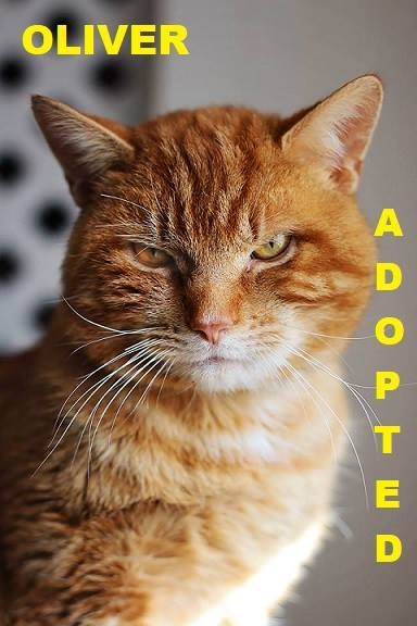 Oliver - Adopted - March 23, 2018 with Finn