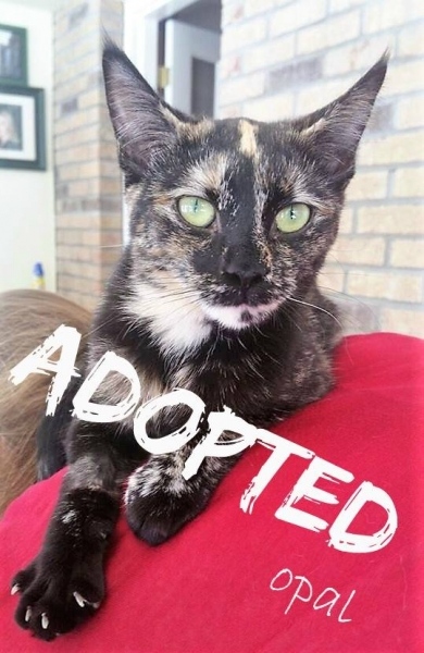Opal - ADOPTED - March 19,2017